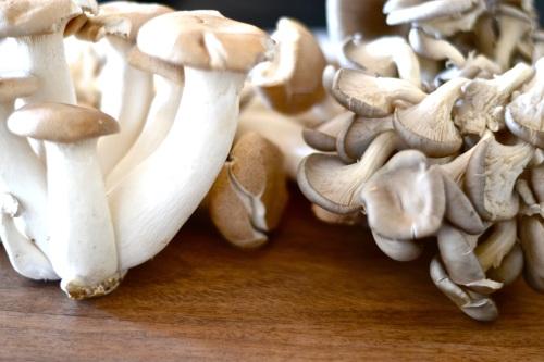 mushroom tart shrooms