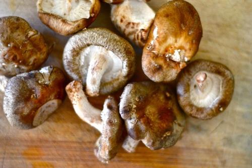 pasta shrooms