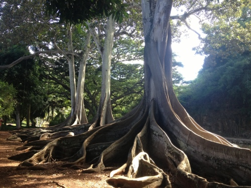 HI trees